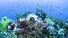 "Header image for the article Scientific Adventures: ""Assisted evolution"" may save reefs from extinction"